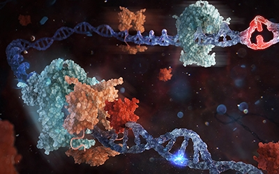 The end to the 30-year debate on the mechanisms behind mismatch DNA repair.